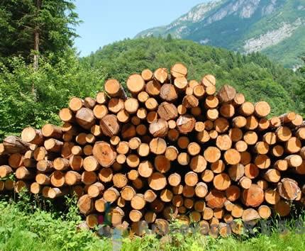 Nehotice ubio brata dok su krali drva u državnoj šumi!