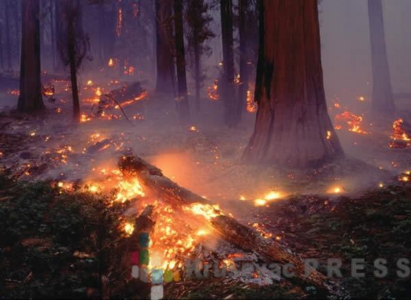 Šumski požar u okolini Aleksandrovca