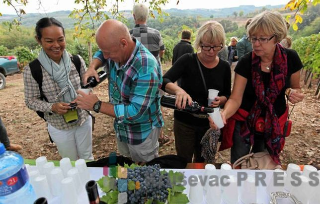 Gosti u vinogradu