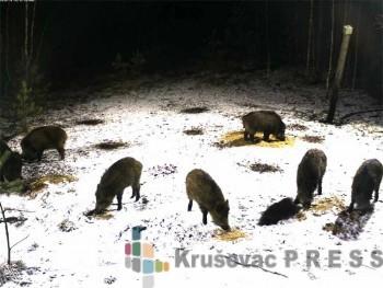 Prihrana divljači