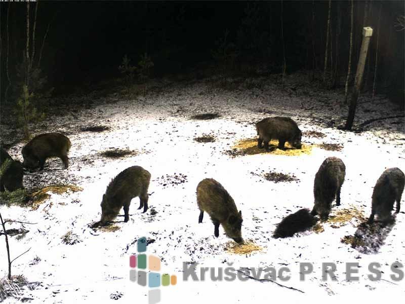 Lovci pomažu divljim životinjama