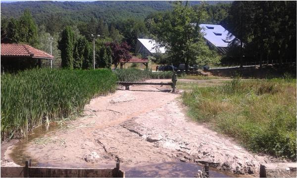 """Volonterski kamp """"Čudesna šuma"""""""
