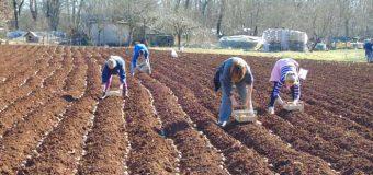 Zakup poljoprivrednog zemljišta u Kruševcu – objavljen oglas