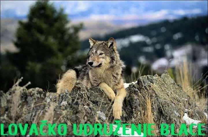 Tradicionalni lov na vukove u Blacu