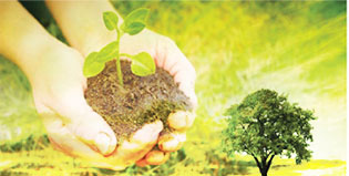 home-section-planting-for-the-planet