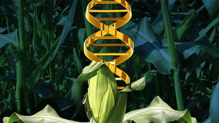 Srbija, Evropa i GMO