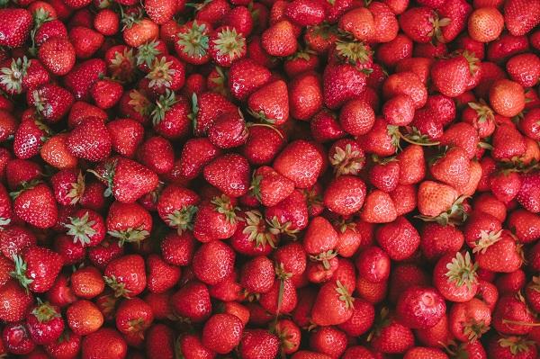 VOĆARSTVO I POVRTARSTVO NOSEĆE GRANE RAZVOJA: Uzgoj jagoda i kornišona najinteresantniji i najprofitabilniji
