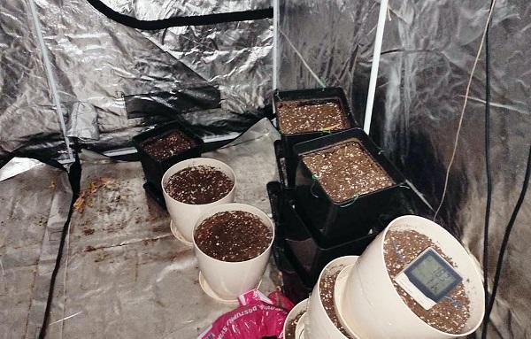 AKCIJA POLICIJE: Pronađena improvizovana laboratorija za veštačko uzgajanje marihuane